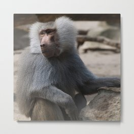 MAGIC MONKEY - Olive Baboon Metal Print