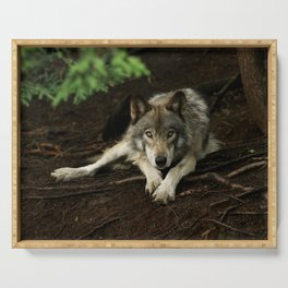 Intense Timber Wolf Serving Tray
