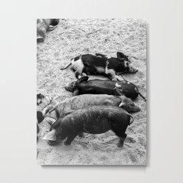 Sleepy Piglets Black & White Metal Print