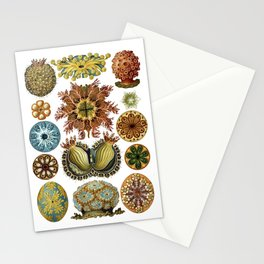 Ernst Haeckel Ascidiae Sea Squirts White Background Stationery Cards