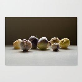 Purple Tomatillos Canvas Print