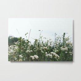 Flowers on Mulholland Metal Print
