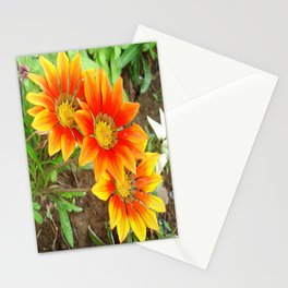 Three Bright Colored Gazania Flowers and Garden Stationery Cards