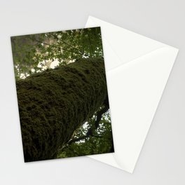 Moss on Tree-Muir Woods, California Stationery Cards