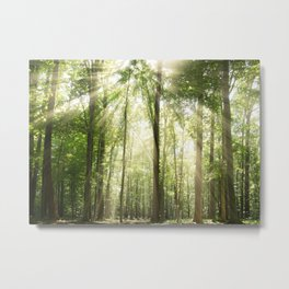 Sun Rays Through Forest Treetops Nature / Botanical Landscape Photograph Metal Print