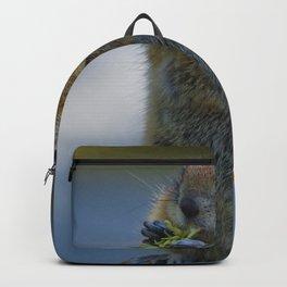 Ground Squirrel in Jasper National Park Backpack