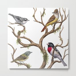 Four Songbirds Metal Print