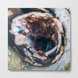 Squirrel House. Photo Metal Print
