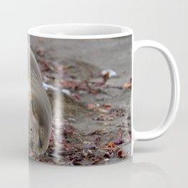 Young elephant seal Coffee Mug
