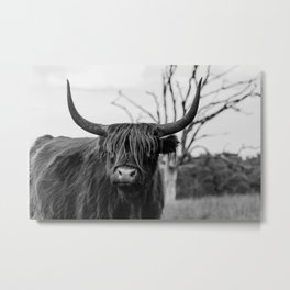 Wild highland cow | Black and white | Nature photography  Metal Print