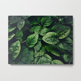 Deep Green Leaves Covered in Water Droplets Metal Print