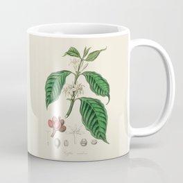 Coffee Bean Antique Botanical Illustration Coffee Mug
