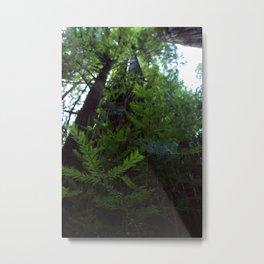 Through the Leaves Metal Print