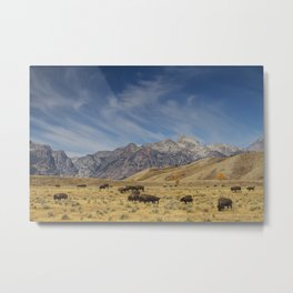 Bison The National Mammal Metal Print