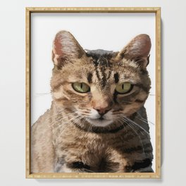 Portrait Of A Cute Tabby Cat With Direct Eye Contact Isolated Serving Tray
