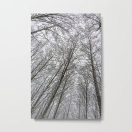 Snow Mountain Winter Forest VI - Nature Photography Metal Print