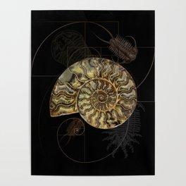 Ammonite Trilobite Fibonacci Spiral Poster