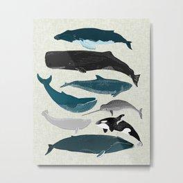 Whales and Porpoises sea life ocean animal nature animals marine biologist Andrea Lauren Metal Print