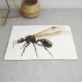 Black Winged garden ant species lasius niger Rug