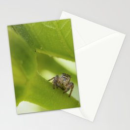 A Jumping Spider (Salticidae) hunts in the garden Stationery Cards