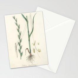 Darnel (Lolium temulentum) illustration from Medical Botany (1836) by John Stephenson and James Mors Stationery Cards