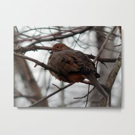 Our mourning dove Metal Print