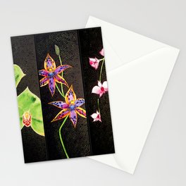 Australia Orchid Cooktown Queen of Sheba Flowers Stems  Stationery Cards