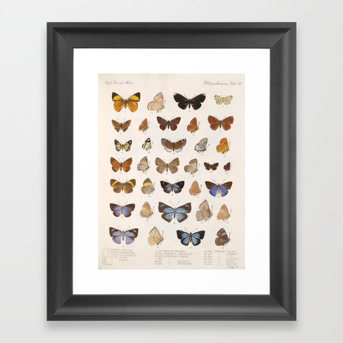 Vintage Scientific Insect Butterfly Moth Biological Hand Drawn Species Art Illustration Gerahmter Kunstdruck