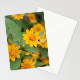 Melampodium Yellow Wild Flowers Full Bloom Photography Stationery Cards