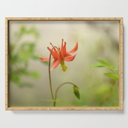 Red Columbine Wildflower Flower Rainforest Northwest Spring Garden Wilderness Nature Outdoors  Serving Tray