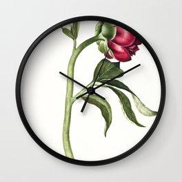 Peony by CJ Crumb (1700 - 1800) Wall Clock