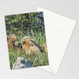 Triplet Bear Cubs Nursing, No. 1 Stationery Cards