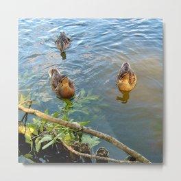 Ducks in Lake Metal Print