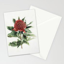 Waratah Flower Stationery Cards