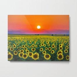 Sunflower Haze Metal Print