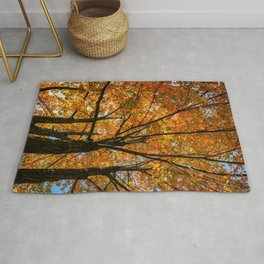 Colorful Maple of New England. Rug