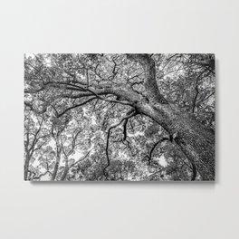 Oak Branches in Ueno Park, Tokyo, Japan Metal Print