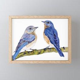 Pair of Eastern Bluebirds on a Branch Watercolor Framed Mini Art Print