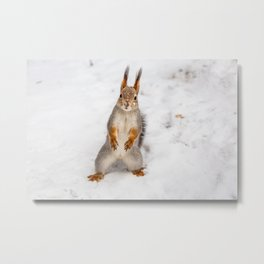 Do you have any boots for squirrels? Metal Print