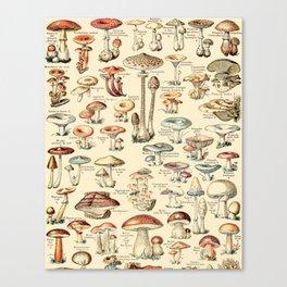 Trippy Vintage Mushroom Chart // Champignons by Adolphe Millot XL 19th Century Science Artwork Canvas Print