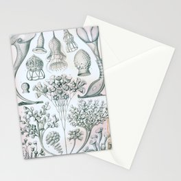 Vintage Print - Haeckel - Art Forms of Nature (1904): Ciliata Stationery Cards
