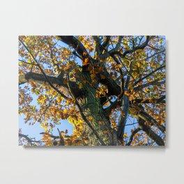 Autumn Oak Metal Print