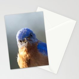 Watercolor Bird, Eastern Bluebird 08, Middletown, Maryland Stationery Cards