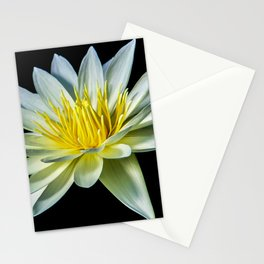 White Nymphaea Water Lily Stationery Cards