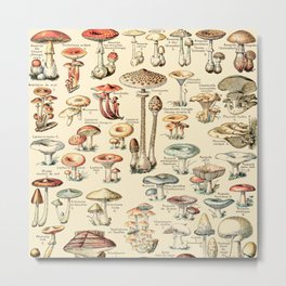 Trippy Vintage Mushroom Chart // Champignons by Adolphe Millot XL 19th Century Science Artwork Metal Print