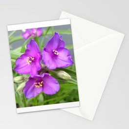 Long-Bracted Spiderwort Stationery Cards