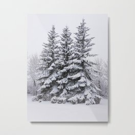 Snow Day - Trees in Winter Metal Print