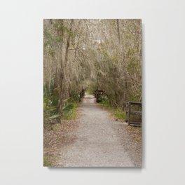 Swamp Path Metal Print