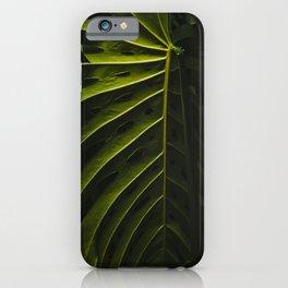 Botanical Garden nº 5 iPhone Case