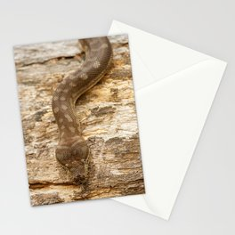 Coastal Carpet Python Stationery Cards